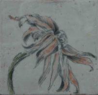 Fading Echinacea
